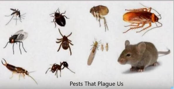 The Many Bugs We Kill and Control Mechanicsville Pest Control Mechanicsville, VA